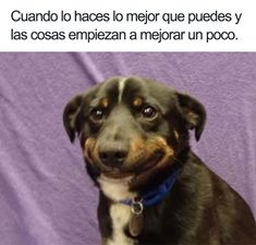 Memes have came into our lives in an enormous way. We've been indulged in those memes so much that we can't keep them out of our lives. To be honest these memes are good enough to spend your time when you have nothing to do. Here are 24 Relatable Memes. Funny Animal Jokes, Funny Dog Memes, Really Funny Memes, Stupid Funny Memes, Funny Laugh, Funny Relatable Memes, Animal Memes, Funny Dogs, Funny Quotes