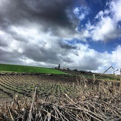 #cañaberal #viñas  y #cielo con #nubes