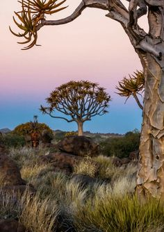 Joggie van Staden : Keetmanshoop Something Beautiful, Wonderful Places, Beautiful Pictures, Africa, Mountains, Sunset, Trees, Nice, World