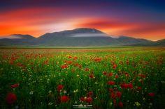Blooms of Castelluccio by Gaspare Silverii Fotografia on 500px