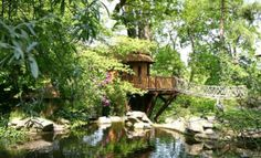 Built in the grounds of an elegant thatched roof home that dates back to 1886, in a fabulous secret garden, the Cliffside lodge tree house fits perfectly in to the existing environment.