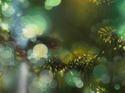 Evening Whispers by Jenn Shifflet