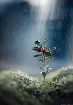 It's a beautiful world! — ybb55: Walk in the rain Alexander Chernov