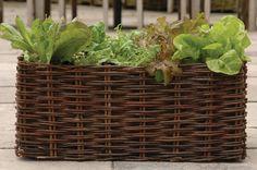 Deze de Wiltfang balkonmand is geschikt voor het telen van groenten zoals sla en andijvie en wordt geleverd ademende plantentas. De mand zelf is gemaakt van natuurlijke wilgentenen. De plantentas plaatst u in de (bodemloze mand) en kan gevuld worden met kokos- of potgrond voor optimale groei condities. Na het seizoen gooit u de tas leeg en vouwt alles klein op voor het volgende seizoen.