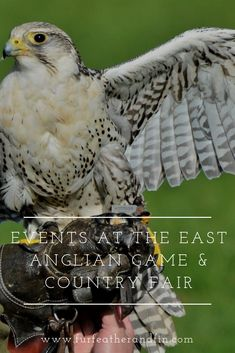 There are loads of fantastic country events and activities taking place at the East Anglian Game & Country Fair Rescue Dogs, Pet Dogs, Clay Pigeon Shooting, The Silver Star, Coarse Fishing, Country Fair, Local Bands, Dog Agility, Family Events