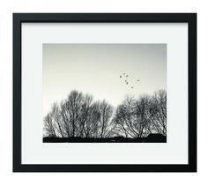Black white, landscape photo, nature photo, wood photography, tree photo, bird photo, winter photo, digital download photo