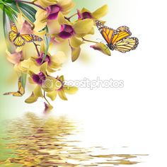 Tropical orchids and butterfly — Stock Image #40950083 But wait, aren't they pink?!