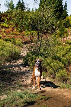 Pilsko z psem. Podejście od Przełęczy Glinne. Beskid Żywiecki