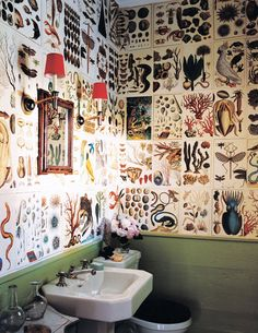 Cabinet of Curiosities Wall Covering