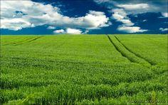 Field by Yancho Zapryanov on 500px