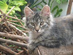Pelusa <3  #gato #kitten #animals #animales #kitty #pet #mascota #animals #gatita #animal Kitten, Gatos, Animales, Cute Kittens, Kitty, Kitty Cats, Kittens, Baby Cats