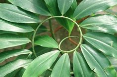 sacred geometry in nature!