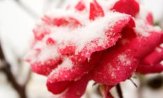 4 Tricks to Outsmart the Winter Blues -by Jordyn Cormier ; Posted on November 2, 2013