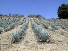 Tequila: It's not just a drink, it's a place.