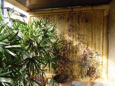 (De Bambu Rei Eco-Design) Bamboo Fence, Plants, Furniture, Home Decor, Landscapes, Ideas, Bamboo Panels, Design Ideas, Dashboards