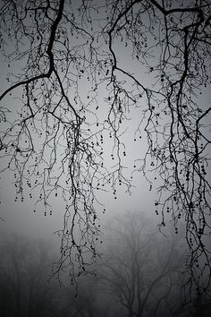 View top-quality stock photos of Bare Sycamore Tree Branches In Mist And Fog. Find premium, high-resolution stock photography at Getty Images. Landscape Photography, Art Photography, Romantic Photography, Beautiful Places, Beautiful Pictures, Deco Nature, Belle Photo, Black And White Photography, Mists