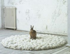 White Pomp pomp rug, terrible unreasonable in this house.  But adorable all the same..
