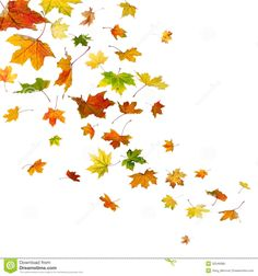 maple-leaves-falling-autumn-isolated-white-background-32546086.jpg 1,300×1,390 pixels