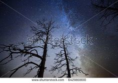 Stock Photo: Dead wood with stars and the night sky on the background. The Milky Way is just behind the tree. -
