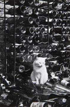 Brassai, Untitled, (City Cats), ca.1938