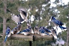 How to Deal with Bully Birds at Your Feeders | Birding| Birds & Blooms Magazine