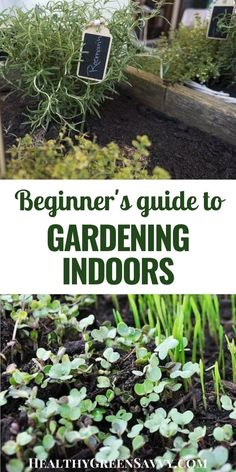 Did you know you can grow vegetables indoors all year round? Find out how to get started growing your own delicious indoor crops!  #indoorgardening #gardening #containergardening #growfood #vegetablegardening #growvegetablesindoors Gardening For Beginners, Gardening Tips, Container Gardening, Indoor Gardening, Indoor Plants, Growing Vegetables Indoors, Potted Geraniums, Luxury Garden Furniture, Outdoor Garden Decor