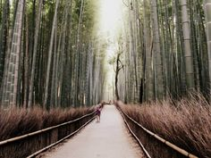 The bamboo forest. Beautiful place! Just outside of Kyoto, Japan