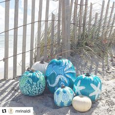 "186 Likes, 15 Comments - Pineapples Palms, Etc . (@pineapplespalms) on Instagram: ""Loving these coastal inspired pumpkins by local artist @mrinaldi on this gorgeous, fall morning.…"""