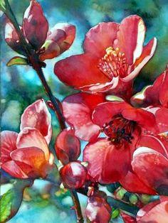 Flowering Quince c2009