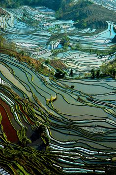 Photo by ichauvel | © Isabelle Chauvel: Terraced rice paddies in Yunnan province, China, make for a tapestry-like scene. February 2010. via Flickr [Please keep photo credit and original link if reusing or repinning. Thanks!]