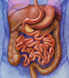 Gastric Sleeve, is the Gastric Sleeve weight loss surgey right for you? learn more.....