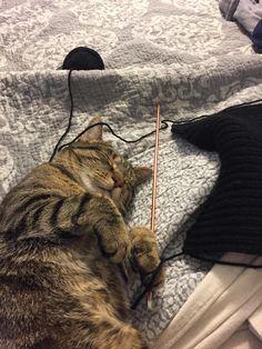 Star Wars kitty http://ift.tt/2j6Nama