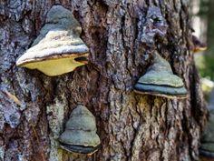 Kleine Baumbewohner, die man meist erst auf den zweiten Blick bemerkt.