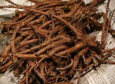Natural Home Remedies, Natural Healing, Herbal Remedies, Shibori, Dandelion Benefits, Dandelion Root Tea, Dandelion Plant, Dieta Detox, Korn