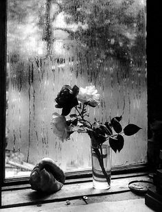 The Last Rose, Josef Sudek, 1956