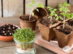 Siew i pikowanie roślin