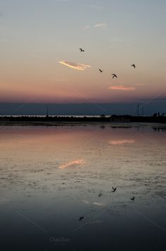 Birds after sunset by Dreamy Pixel on Creative Market