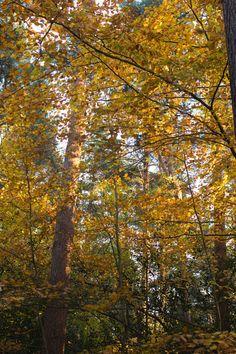 Honey Caramel, Creme Caramel, Sunny Go, Salt And Honey, Walk In The Woods, Autumnal, Far Away, Border Collie, Tray Bakes