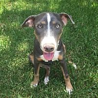 Available Pets At Honoring Hope And Faith Rescue Inc In Houston