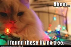 On the 9th Day of Catmas my True Love Gave to Me...