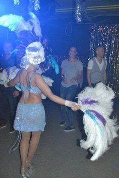 Cats Beat  #entertainment  #ShowLinea Events  www.showlineaevents.com