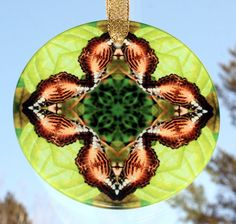 Brown Cliipper Butterfly sacred geometry mandala kaleidoscope suncatcher titled Champagne Zest <br /> <br />This stunning butterfly beveled glass sun catcher illuminates my geometric mandala kaleidoscope design when light shines through it! It is 3 - ½ inches in diameter and has a beveled edge. The Suncatcher comes with a ribbon and suction cup for hanging. The ...
