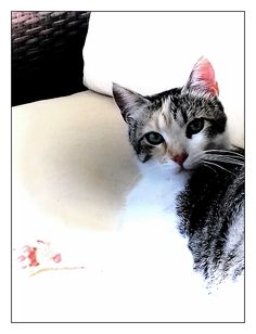 La Principessa Canvas Print featuring the photograph La Principessa by Dorothy Berry-Lound Canvas Art, Canvas Prints, Framed Prints, Cat Reading, Berry, Canvas Material, Cats And Kittens, Cat Lovers, My Arts