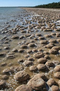 If you're travelling south of Mandurah you can stop at the Cape Bouvard Winery and see the nearby thrombolites - hidden parts of Western Australia.