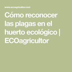 Cómo reconocer las plagas en el huerto ecológico | ECOagricultor