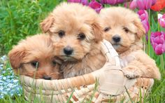puppies | Puppies Little Sweethearts