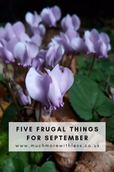 Check out my 5 frugal things for a fresh start to September, including snapping up freebies, bagging charity shop bargains and restarting running. John Lewis Gifts, Live On Less, Cash Now, Couch To 5k, Show Me The Money, Charity Shop, New Start, Fresh Start, Money Saving Tips