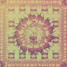 Stag Kaleidoscope. by Eleanore Longhurst