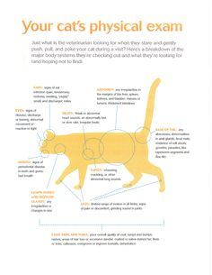 Your cat's physical exam - what your veterinarian is looking for. #cathealthcare