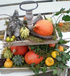 Open Dagen bij de kalebassenkas in 't Kruis. Met kunst en creativiteit.  Zondagen 16, 23 en 30 sept. 2012